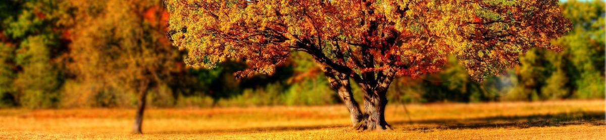 cropped-tree-99852_1920.jpg