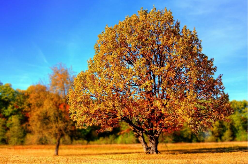Baum in Nikolassee